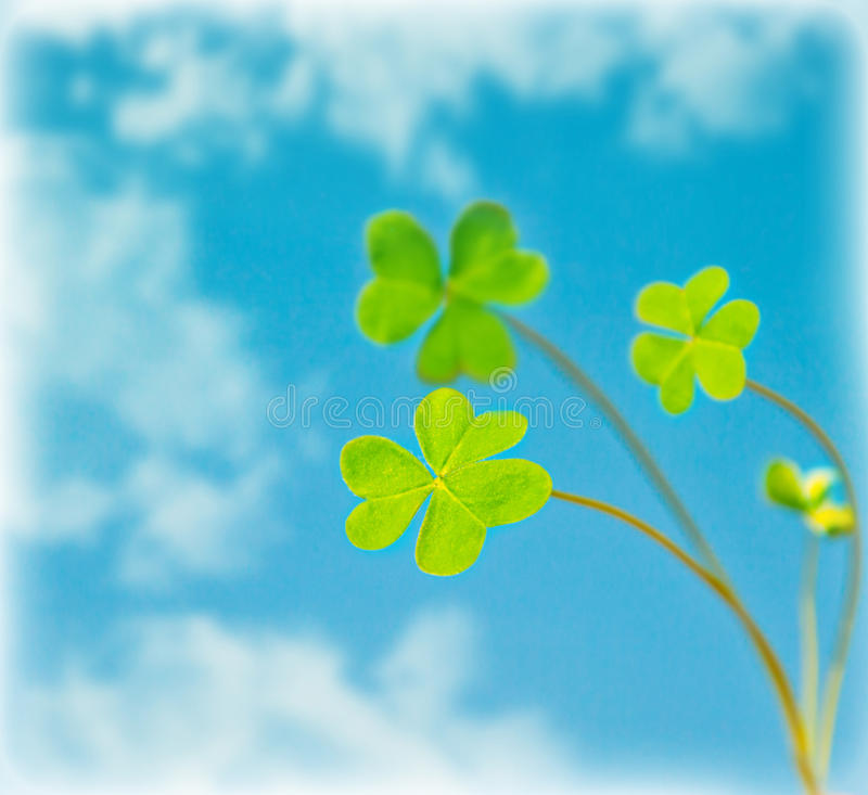 Abstract natural background, clover over sky stock image
