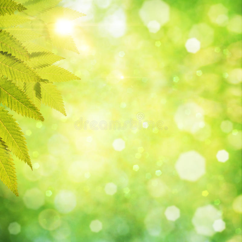 Download Abstract Natural Backgrounds Stock Illustration - Image: 25612757