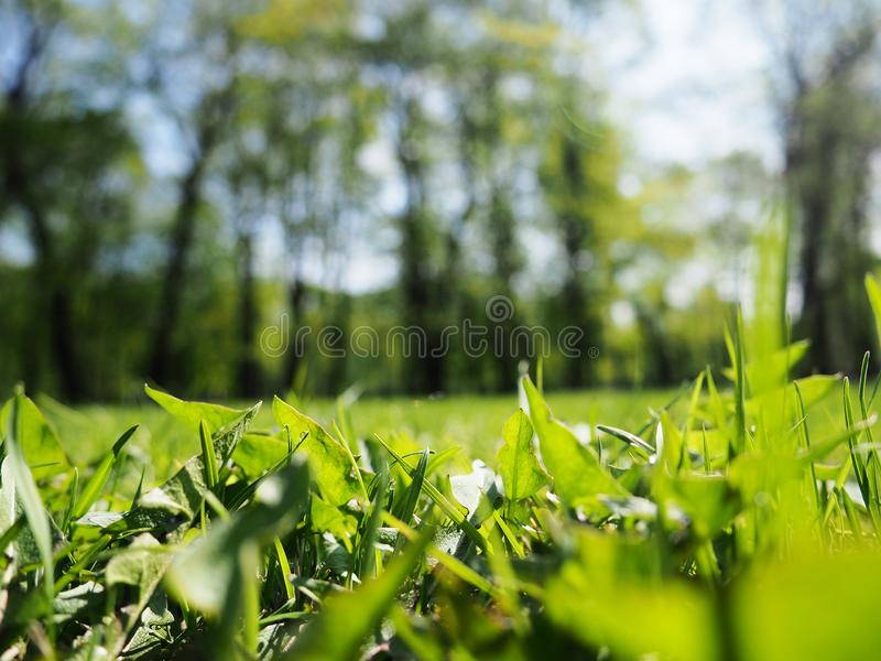 Abstract natural backgrounds with beauty bokeh, art abstract spring background or summer background with fresh grass stock images