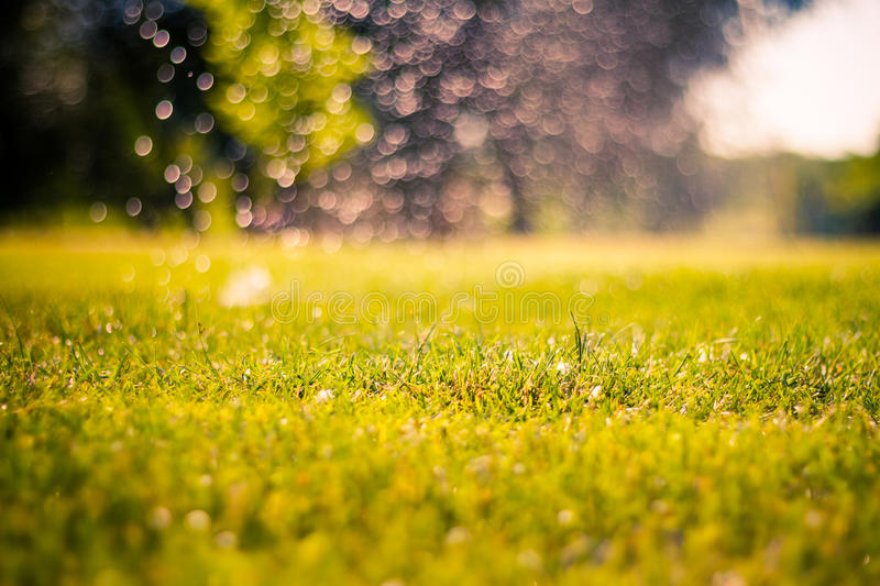 Abstract natural backgrounds with beauty bokeh. Under the bright sun. Abstract natural backgrounds concept stock image