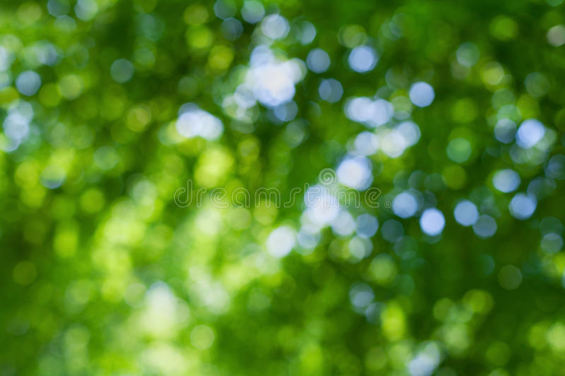 Abstract natural blur background, defocused leaves, green bokeh royalty free stock photos