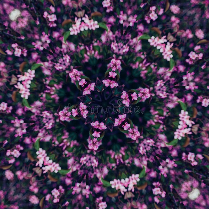 Abstract floral background, pink flowers with kaleidoscope effect royalty free stock image