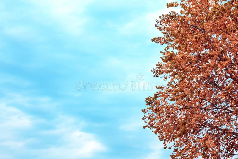 Abstract natural seasonal autumn background with mine space. Tree with orange yellow red foliage in the forest and empty sky in stock images