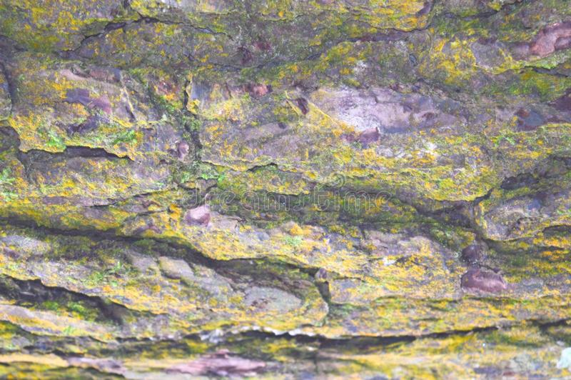 Abstract Natural Texture and Pattern - Tree Bark with Growth of Mold on Surface royalty free stock photography