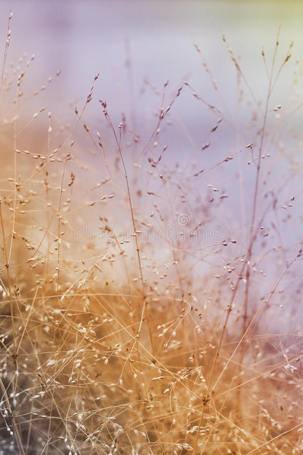 Abstract nature background. With grass in the meadow stock photos