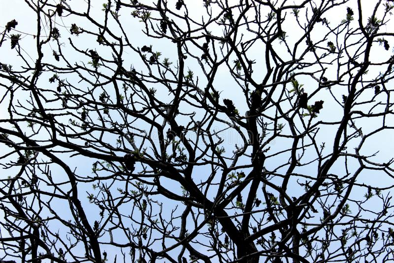 Abstract Nature Background. Silhouettes Of Branches. Cropped Shot Of A Tree royalty free stock images