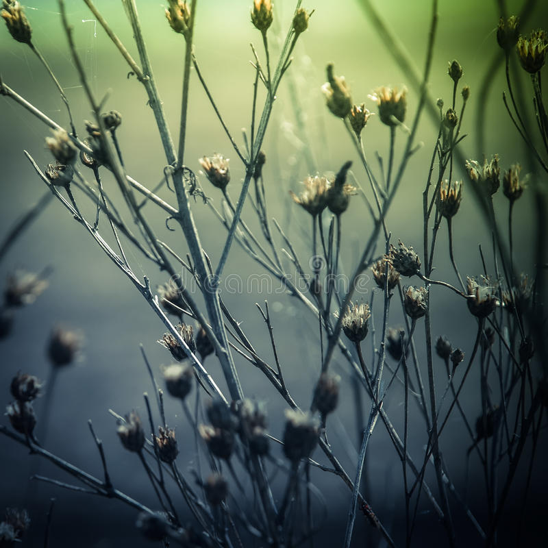 Free Abstract Nature Background With Wild Flowers And Plants Stock Photos - 44796883