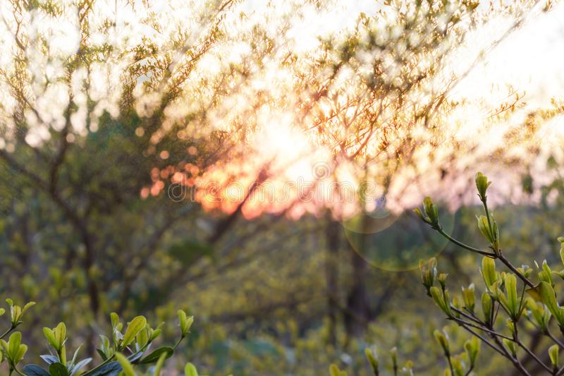 Abstract nature branch tree background in sunset and lens flare royalty free stock image