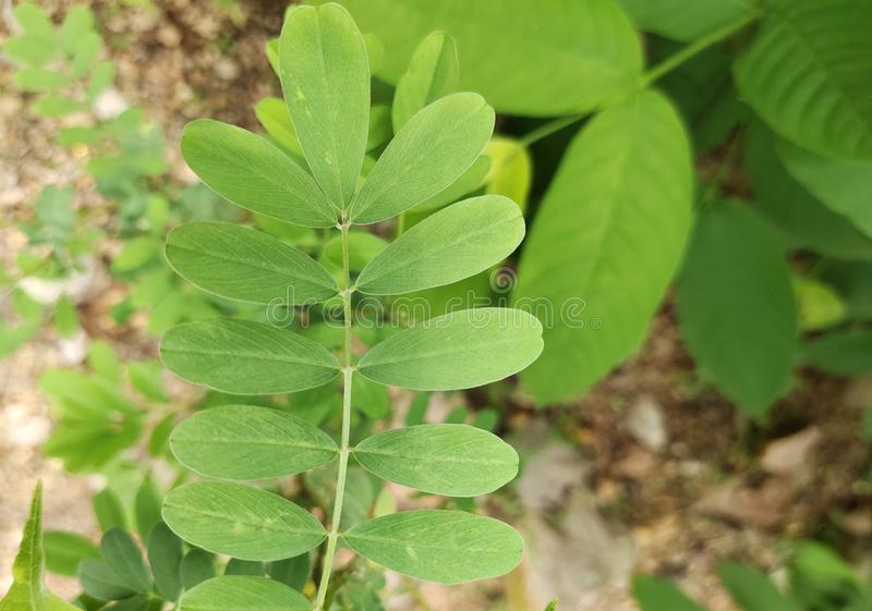 Abstract nature leaf green texture background. Abstract nature leaf green texture background stock photos