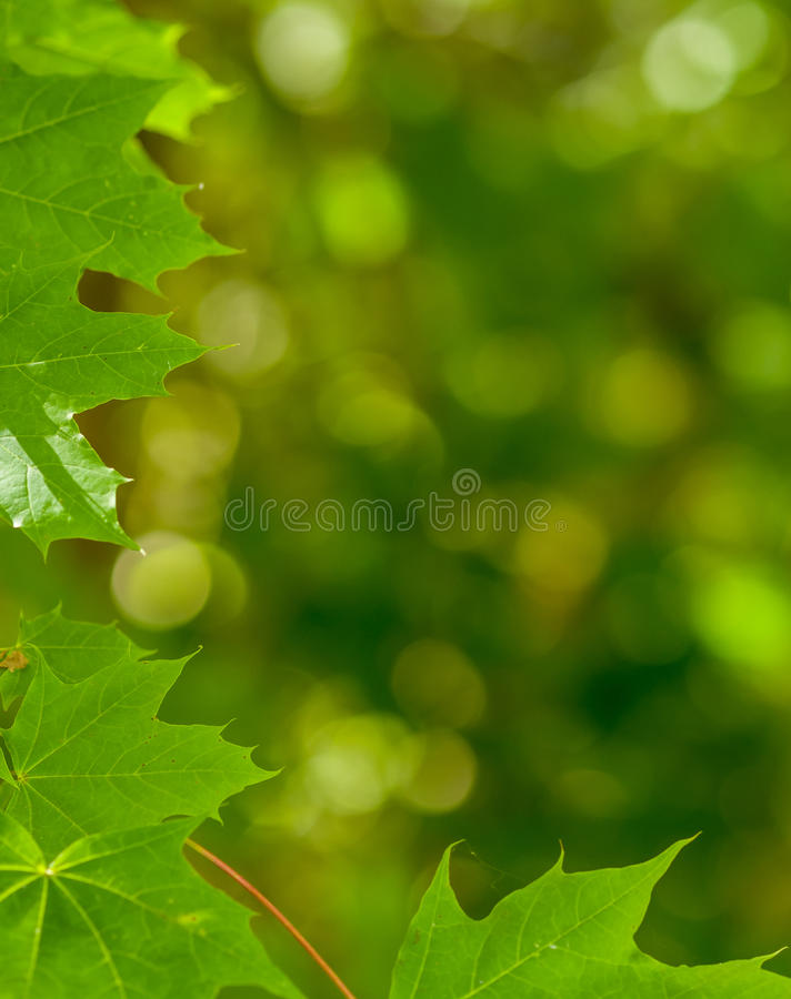 Abstract Nature Leaves Background Royalty Free Stock Photos