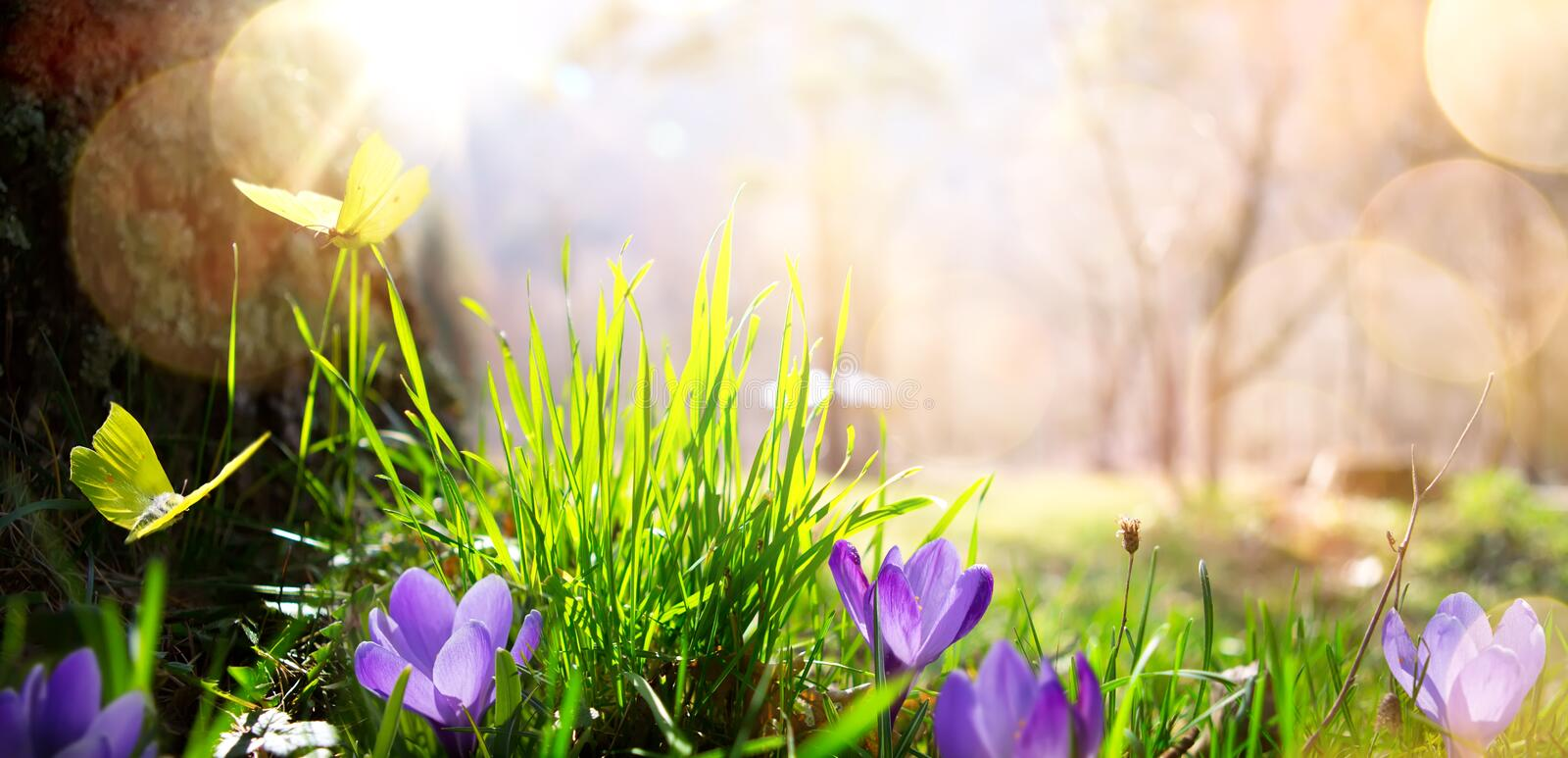 Abstract nature spring Background; spring flower and butterfly royalty free stock photography