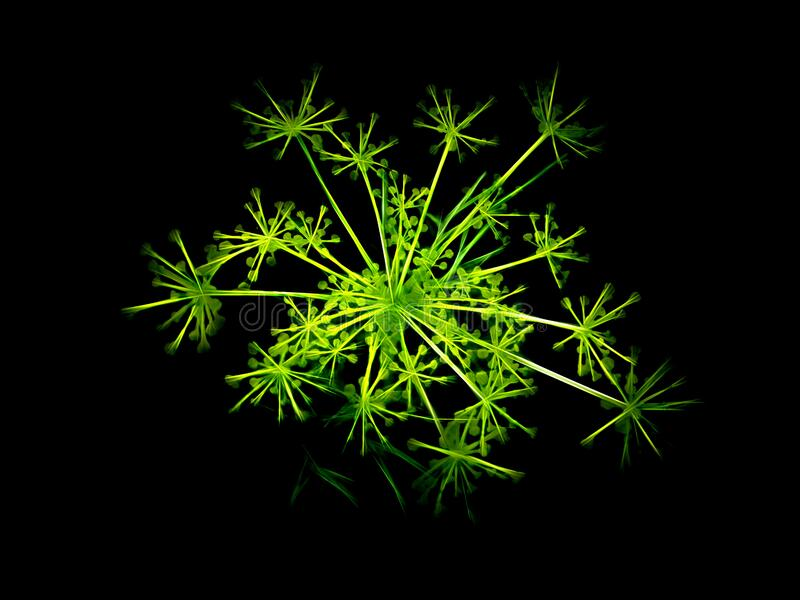 Green Neon Dill royalty free stock photography