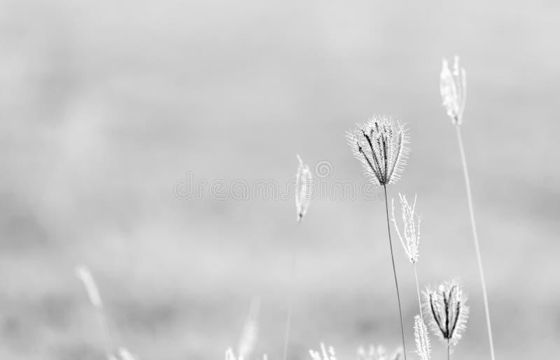 Abstract onduidelijk beeld van bloem en gras voor achtergrond stock foto's