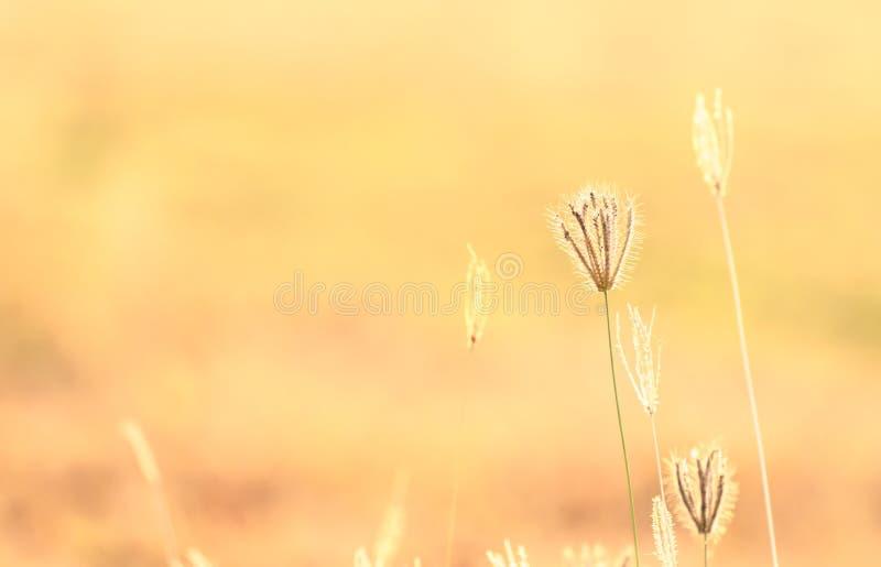 Abstract onduidelijk beeld van bloem en gras voor achtergrond stock foto