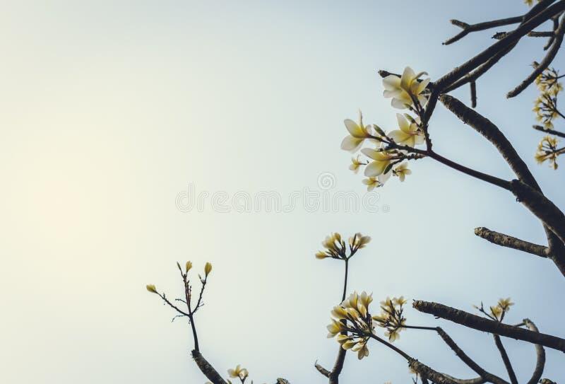 Abstract onduidelijk beeld van boomtak in humeurige toon stock foto's