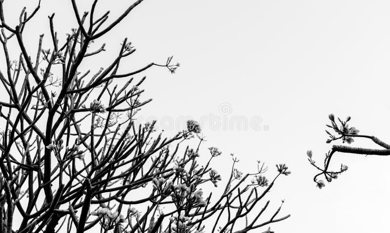Abstract onduidelijk beeld van boomtak in humeurige toon royalty-vrije stock foto's