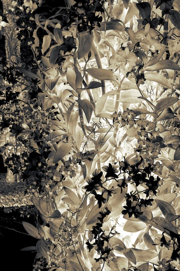 Abstract orchid tree royalty free stock photo