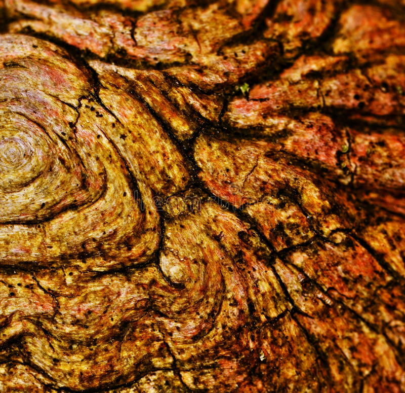 Abstract organic texture stock images