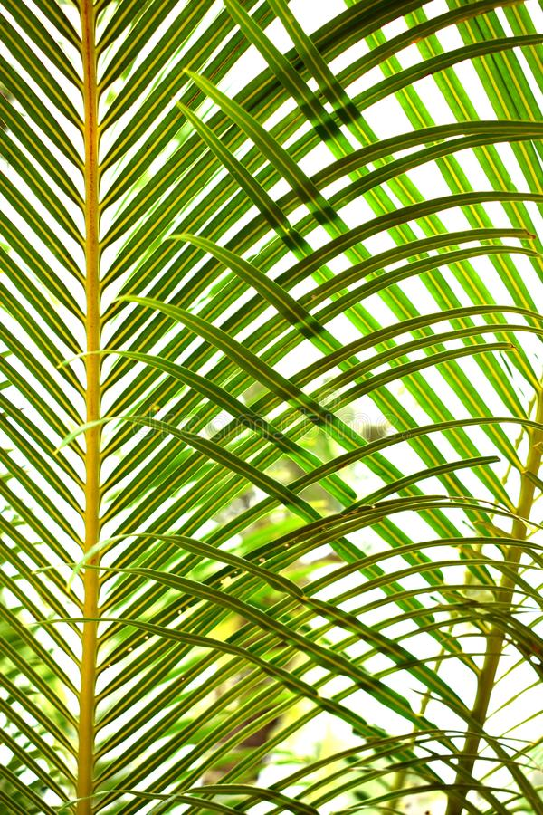 Abstract foliage background royalty free stock photo