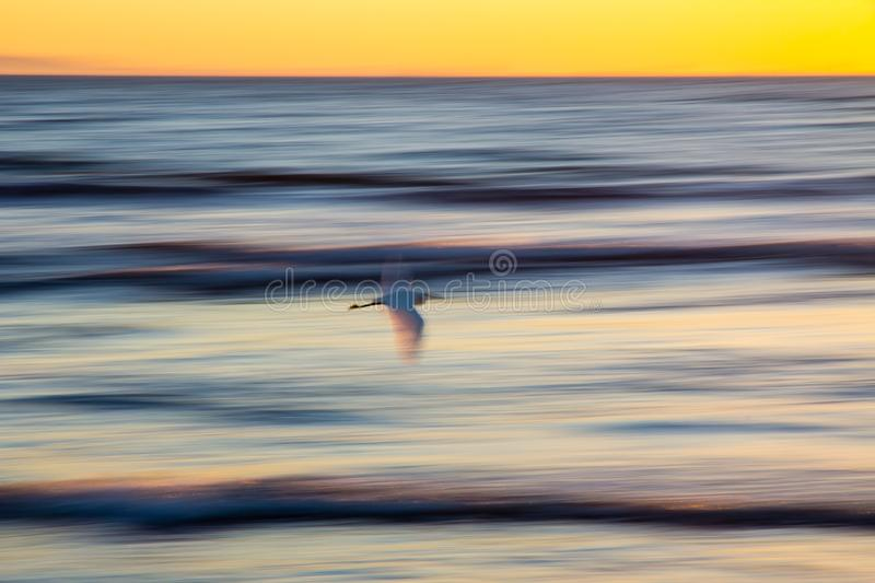 Abstract panning of seabird flying over ocean at sunset. Seabird flies over Pacific Ocean close to the California coast at sunset. Panning is used to blur waves stock images