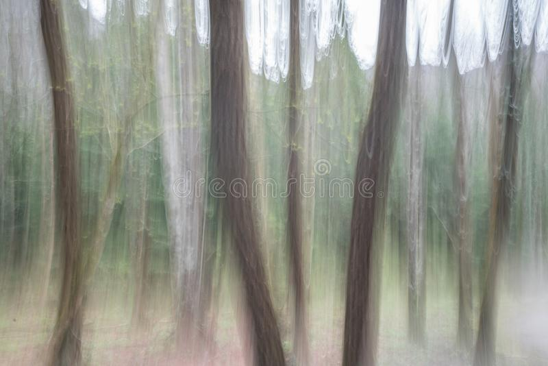 Abstract panning view of forest in springtime green. In southern Switzerland near Locarno stock photos