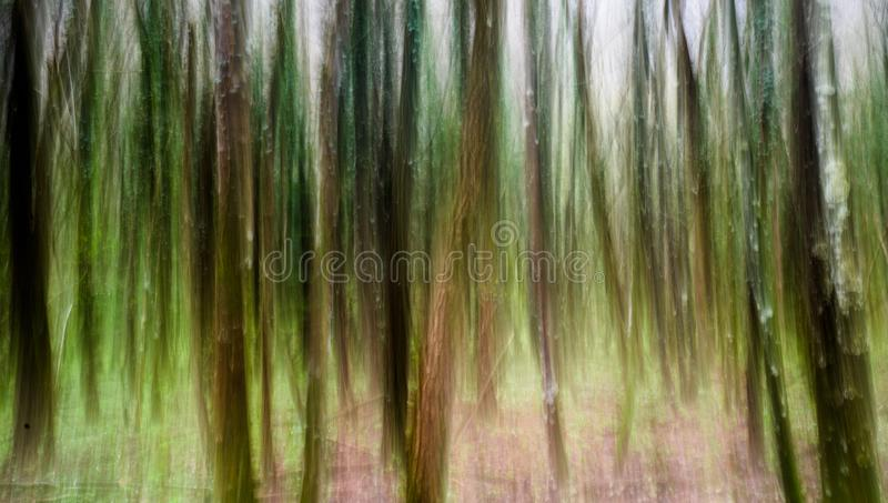 Abstract panning view of forest in springtime green. In southern Switzerland near Locarno royalty free stock photography