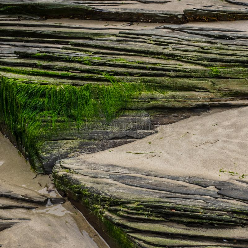 Green lichen and sand on slate rocks stock image