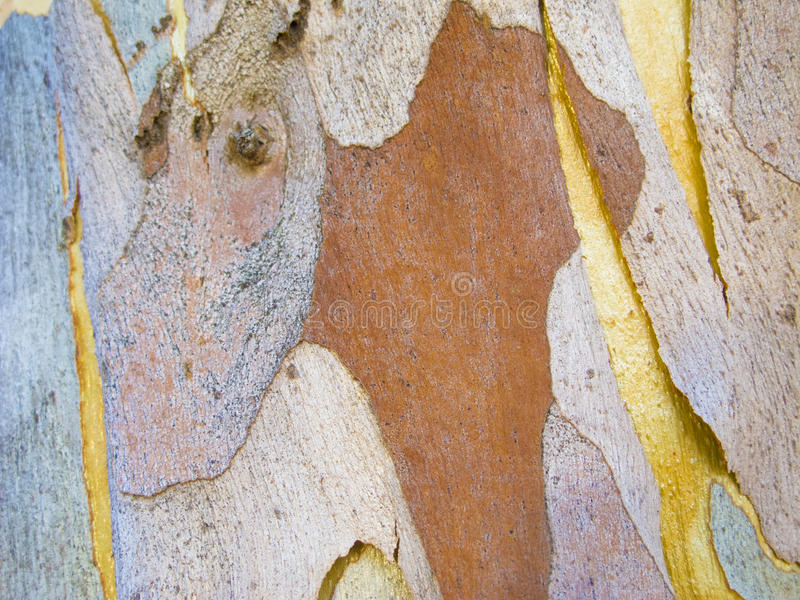 Abstract patterns on tree bark royalty free stock photography