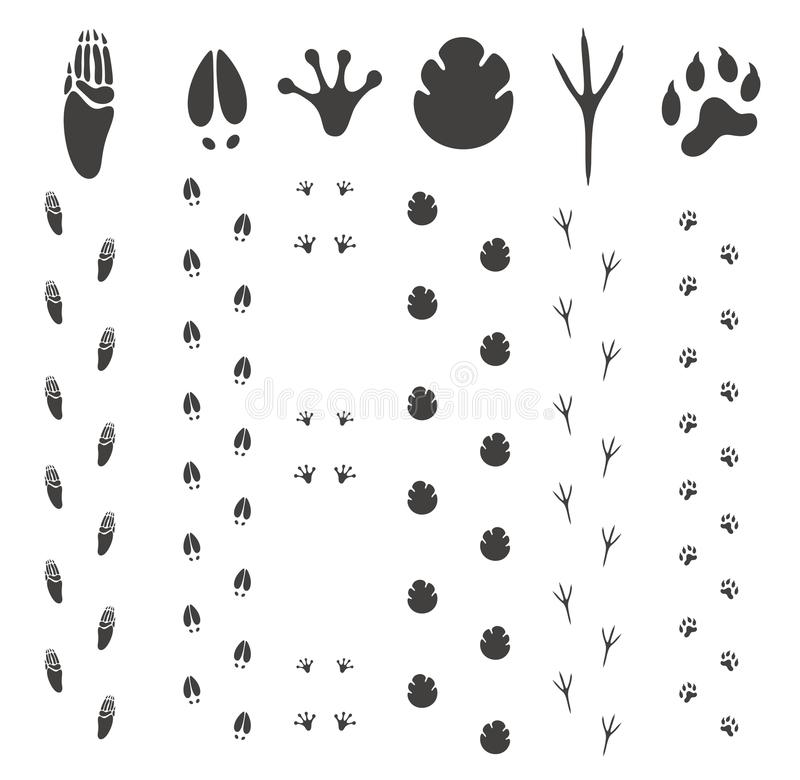 Abstract Paw Print vector illustration