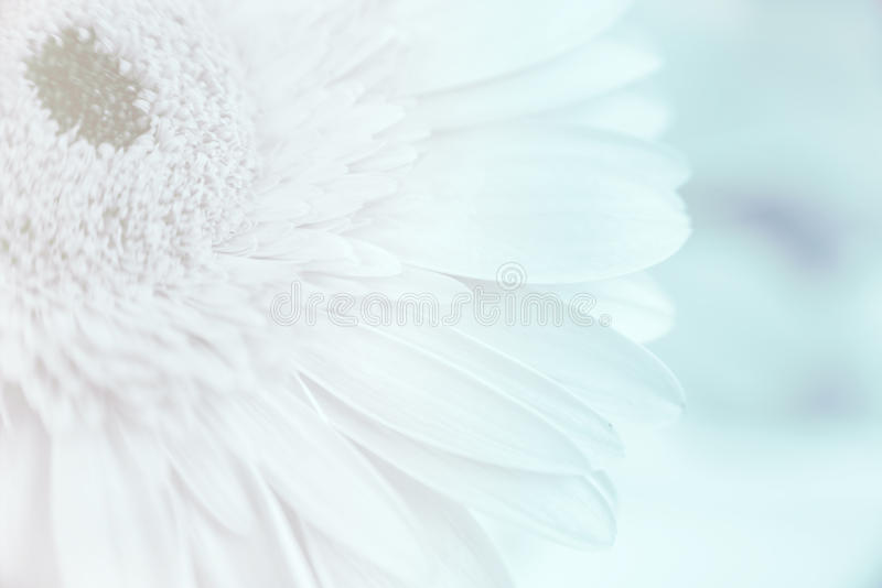 Abstract petals flower royalty free stock photography