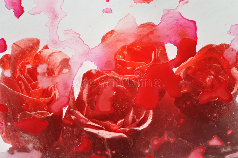 Abstract photo of blurred and stain painted rose flowers on white background stock photos