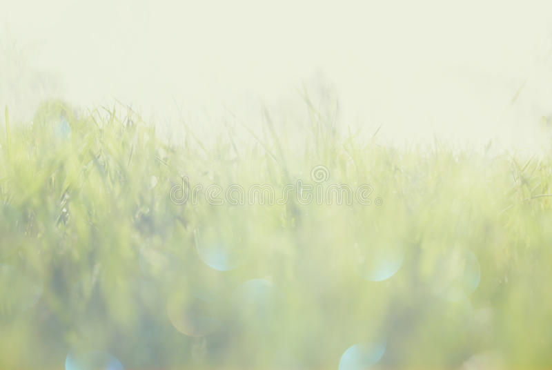 Abstract photo of light burst among grass and glitter bokeh lights. image is blurred and filtered . royalty free stock photography