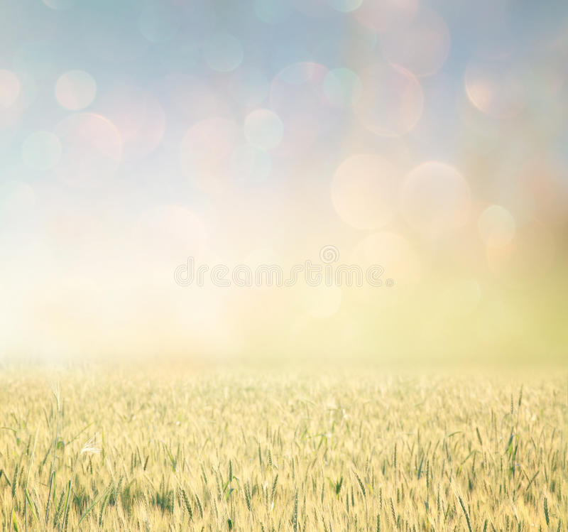 Free Abstract Photo Of Wheat Field And Bright Bokeh Lights. Stock Photos - 51530413