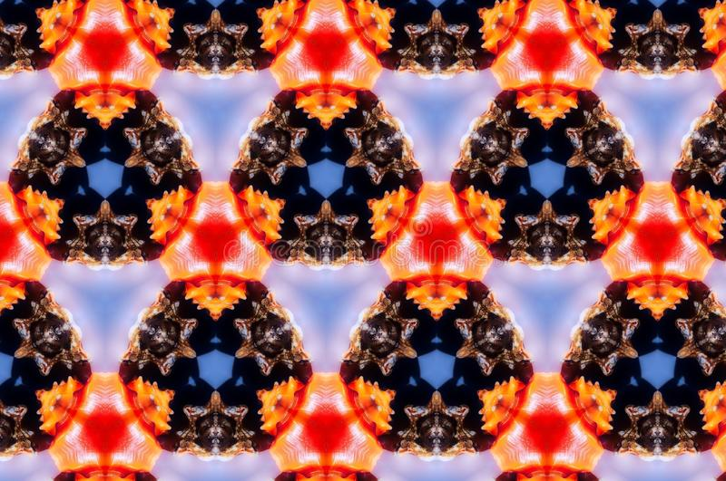 Abstract photo pattern sea shell. Orange and red. Black and blue. Yellow and white. Seamless photo background pattern. Sea shell. Abstract shapes stock illustration