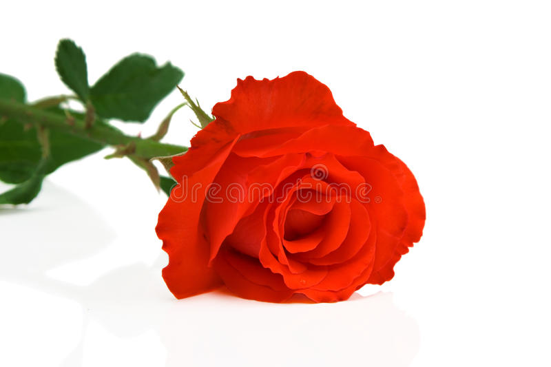 Download Abstract Photo Of Rose Flower Royalty Free Stock Photography - Image: 16031767