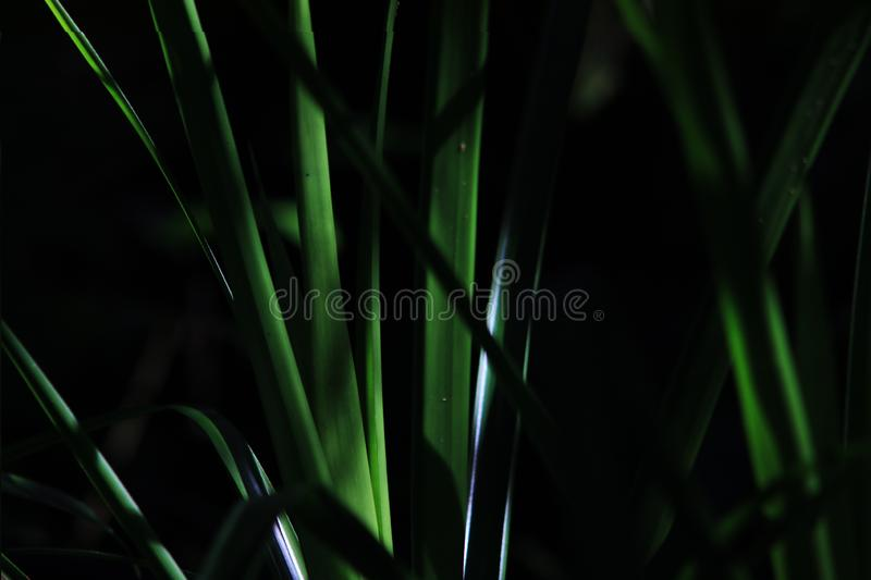 Abstract photo of a small plant with the sun on its green leaves royalty free stock images