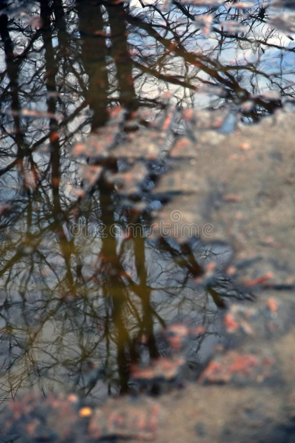 Abstract photo of a tree reflection in a water puddle stock photo