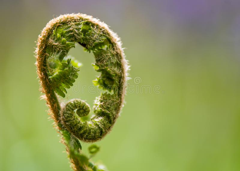 An abstract photograph of the top of a plant which appears hairy. And to curl up into itself royalty free stock photos