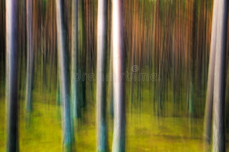 Abstract Pine Forest royalty free stock photos