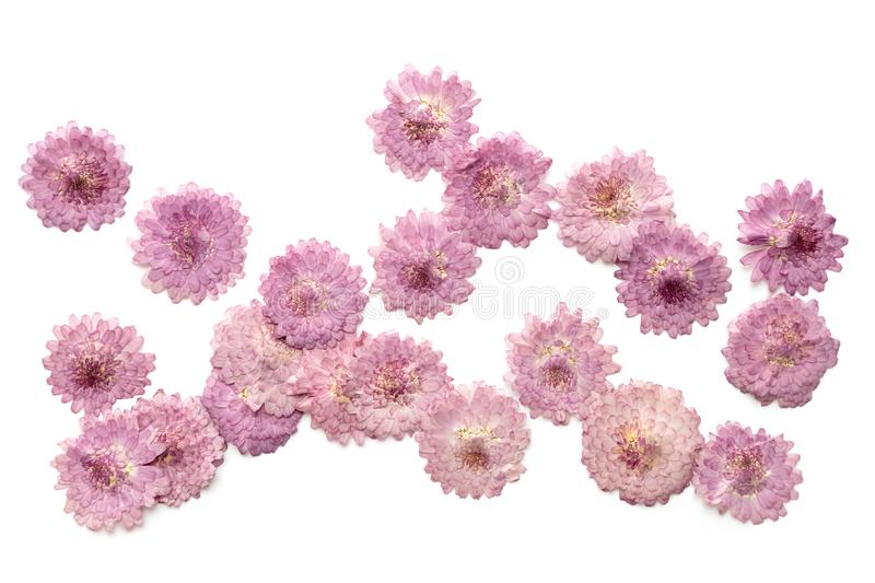 Abstract pink flower background isolated on white. Blooming flow. Ers stock photo