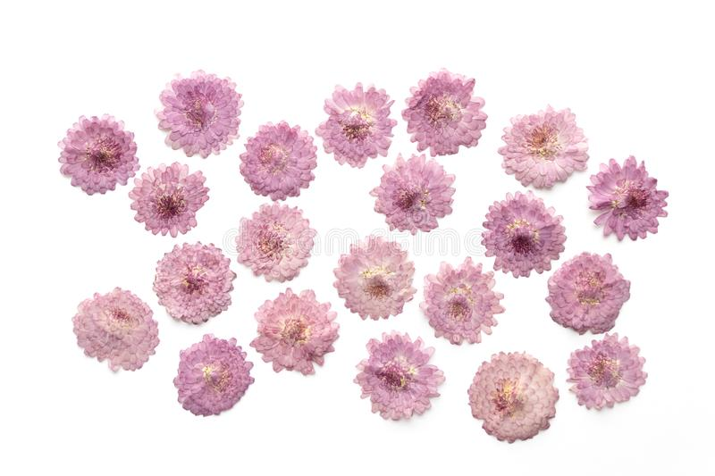 Abstract pink flower background isolated on white. Blooming flow. Ers royalty free stock image