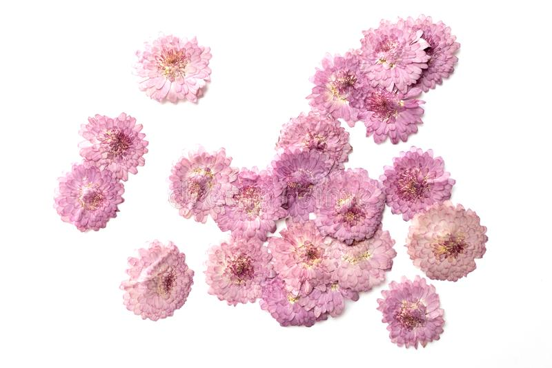 Abstract pink flower background isolated on white. Blooming flow. Ers royalty free stock photography