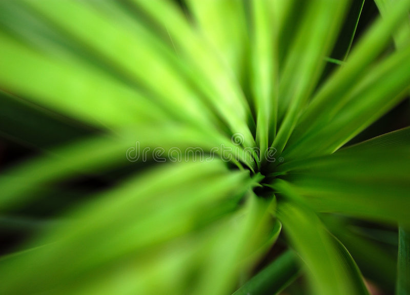 Abstract Plant Royalty Free Stock Photography