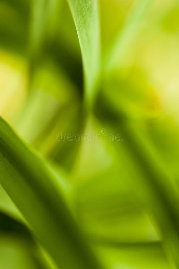 Abstract plant close up shot