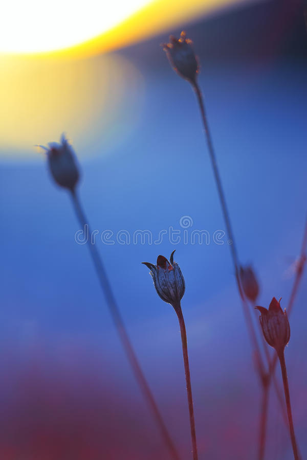 Abstract Plant Silhouette at sunset stock photography