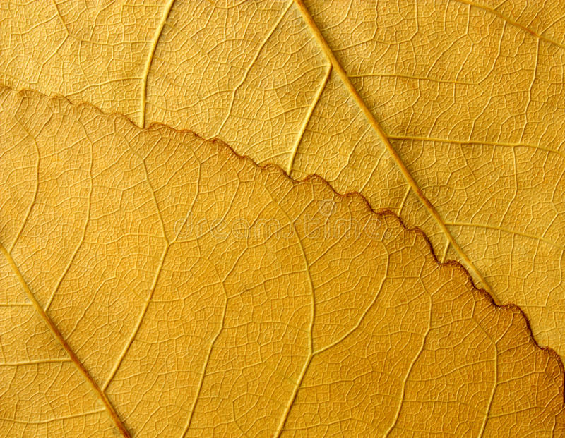 Abstract plant texture stock photo