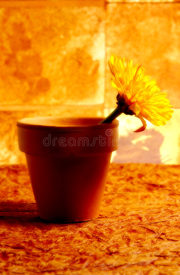Download Abstract Potted Flower stock image. Image of petals, brown - 46243