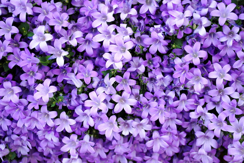 Abstract purple nature stock images