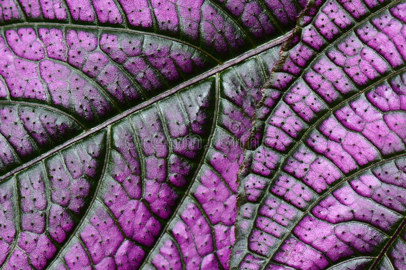 Abstract purple plant leaf stock photos