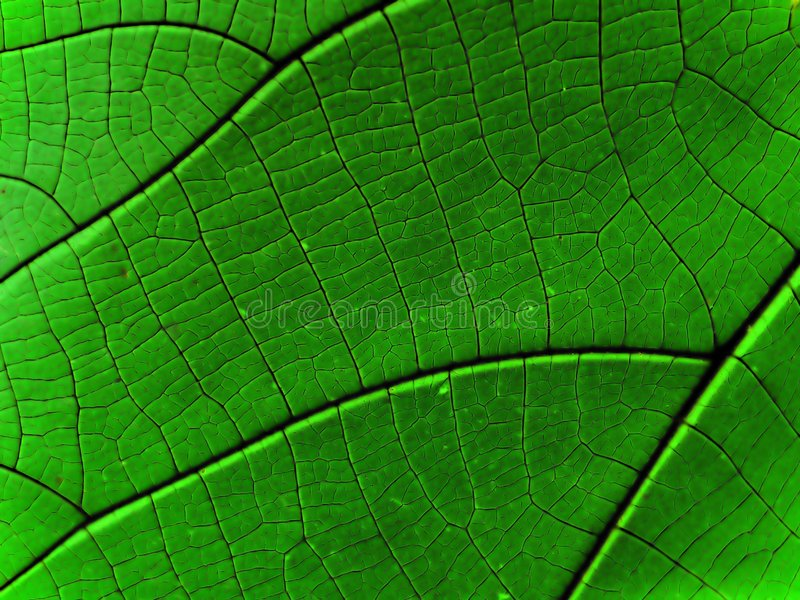 Abstract Rain Forest royalty free stock photos